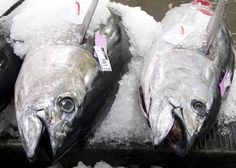 Potential harvest of most fish stocks largely unrelated to abundance