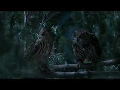 GEICO Owl Commercial   Did You Know Some Owls Aren't That Wise