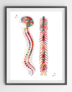 Spine watercolor print anatomy art spinal cord poster vertebral column print medical art skeletal Vertebrae illustration spine art prints [801]  This is a fine art watercolor print of my original handmade watercolor, digitally reworked.  ♥ MATERIALS: High quality fine art prints (Giclee), made using Epson Pigment Inks, which are guaranteed not to fade for 100+ years (Museum quality); Extra quality FineArt Paper.  ♥ PAPER: Paper is very important to reach the best result on different…