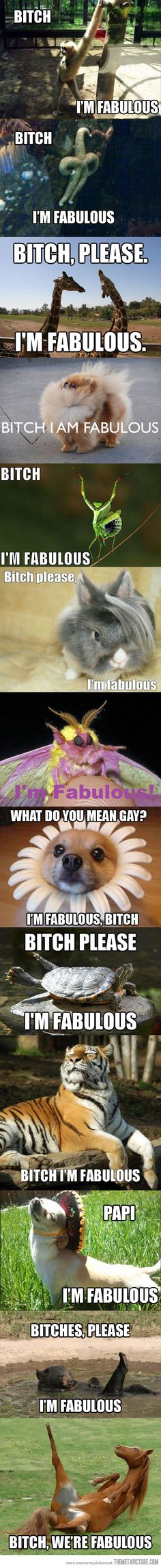 """Papi, I'm fabulous"" haha these are too cute and funny! Haha Funny, Funny Cute, Funny Memes, Hilarious, Funny Stuff, Humor Animal, Funny Animals, Cute Animals, Im Fabulous"