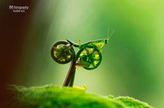 Grasshoppa bikes to work.