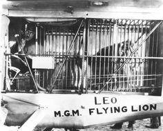 In 1927, the MGM lion's plane crashed and he survived on sandwiches