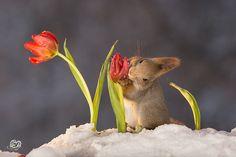 flower for breakfast | by Geert Weggen