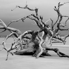 """""""Christmas Day at Driftwood Beach"""" by Dave Gibson"""