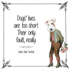 """Too Short"" Wirehaired Fox Terrier, Fox Terriers, Wire Fox Terrier, All Dogs, I Love Dogs, Victorian Illustration, Dog Years, Handsome Faces, Cherished Memories"