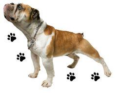 WSD40 Bulldog removable wall sticker. animal wall by ArtFeverUK, £19.00