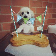 """""""Koko celebró feliz su cumpleaños junto a su familia humana!  Deseamos que cumplas muchos muchos más!! ❤️ #PerroFeliz #chachayelgalgo…"""""""