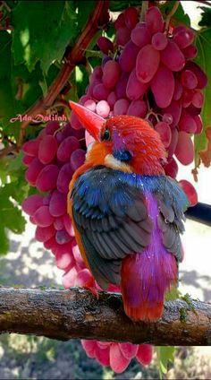 Oriental Dwarf Kingfisher???