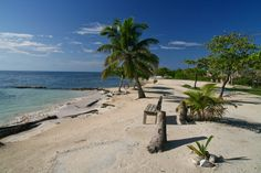 Utila, Honduras. can't believe I found this online, the beach we hung out at!