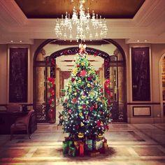 Christmas Tree fairytale