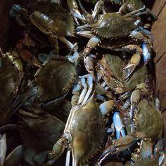 recipe: order live blue crabs online [32]