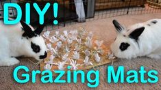 rabbit toy Grazing Mats for Chewing Diy Bunny Cage, Diy Bunny Toys, Bunny Cages, Rabbit Cages, Rabbit Toys, Pet Rabbit, Rabbit Feeder, House Rabbit, Mini Lop Bunnies