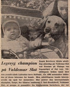 My children grew up surrounded  by the most gorgeous Labradors - Nicolas here with Grandfathers famous CH Redgame Sandylands Tango - probably the most important import in Denmark at the early days - he was wonderful !!