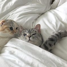 ✔ Animals And Pets Cats Kittens Cool Cats, I Love Cats, Crazy Cats, Cute Kittens, Cats And Kittens, Animals And Pets, Baby Animals, Cute Animals, Gato Gif