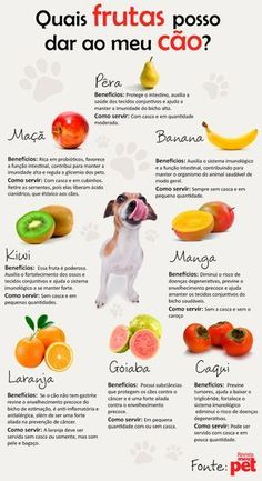 Frutas para cães/fruit for dogs Baby Dogs, Pet Dogs, Dog Cat, Love Pet, I Love Dogs, Shih Tzu, West Terrier, Puppy Gifts, Pet Care