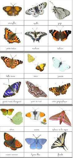 DIY Montessori: Les papillons de nos jardins Best Picture For Montessori Materials baby For Your Taste You are looking for something, and it is going to tell you exactly what you are looking for, and
