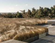 On eastern Long Island, owners of a house that modernist architect Norman Jaffe had sited atop a dune 30 years earlier decided to save their home from the Atlantic Ocean by moving it to a cornfield. Then it was up to landscape architects LaGuardia Design Group to create a beautiful backdrop: