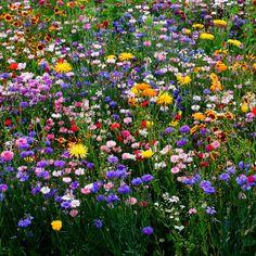 Pin by ムーンチャイルド on Flower/plant aesthetic~ in 2020 Wild Flower Meadow, Meadow Flowers, Flowers Nature, Wild Flowers, Fresh Flowers, Plant Aesthetic, Nature Aesthetic, Flower Aesthetic, Beautiful Flowers Garden