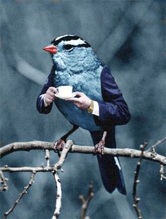 bird with arms drinking tea