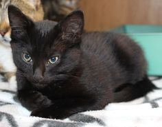 one of the many black kittens we have had so far this season