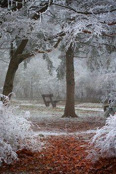 Winter Wonder by Ildiko Neer