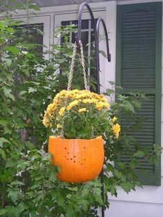 Make a fun hanging pumpkin planter out of a real or fake pumpkin! DIY