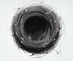 Bulbul Nest 99 69 x 78cm   Charcoal drawings on paper by Jonathan Delafield Cook  http://www.jonathandelafieldcook.co.uk/