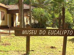 O Museu do Eucalipto Completou 100 Anos! Saiba Mais em ''http://cienciasteennews.blogspot.com/2016/04/museu-do-eucalipto-faz-100-anos-e-e.html''