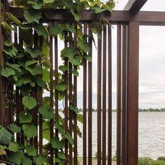 Eugene Gilligan (@eugenegilligandesign) • Instagram photos and videos Climbers, Vines, Garden Design, Outdoor Structures, Photo And Video, Water, Plants, Screens, Photos