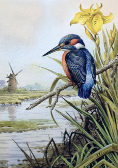 Bird; Rushes; River; Martin-pecheur; Windmill; Flower; Water Painting - Kingfisher With Flag Iris And Windmill by Carl Donner