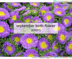 Month of September Flower Name September Birth Flower, September Flowers, September Baby, Birth Month Flowers, Hello September Images, Michaelmas Daisy, Month Signs, Flower Names, Garden Club
