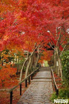 画像A: 紅葉が好きで、毎年見に行っています。