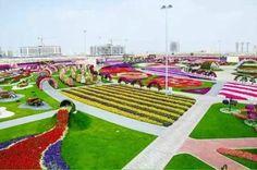 惊艳全球!迪拜举办世界最大花卉展,沙漠中的花海!