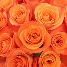 FiftyFlowers.com - Tropical Amazon Orange Rose. Whitney, what are your thoughts on how roses would look with the other flowers?