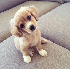 I'll name him: Puddin'