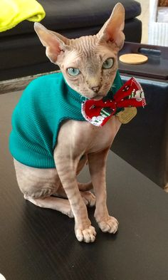 When your expecting visitors your wear a Bow-tie!   Quand on attend de la visites on porte un noeud-papillon!