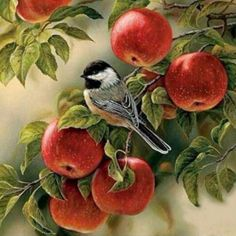 Oil Painting Pictures, Pictures To Paint, Diy Painting, Apple Painting, Bird Pictures, Cross Paintings, Animal Paintings, Animal Drawings, Bird Paintings