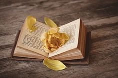 Livro, Aberto, Campal, Páginas Do Livro