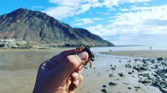 Tesoros naturales en #SanFelipe ¡Ven y descúbrelo! 🦀🌊☀️ Inicia tu aventura visitando: www.descubresanfelipe.com #FelizFinDeSemana #BuenViernes #Playa #Beach #BeachVacations #BajaNorte #NortBaja #SanFelipeMx #MexicoLindo #BeachAdventure  Aventura por melendrezinzunza  #Photography #Leaves #Trees #Fashion #Art #Nature #Invierno #love #instagood #photooftheday #tbt #beautiful #cute #me #happy #fashion #followme #follow #selfie #picoftheday #friends #instadaily #girl #fun #tagforlikes #smile…