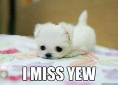 I miss yew