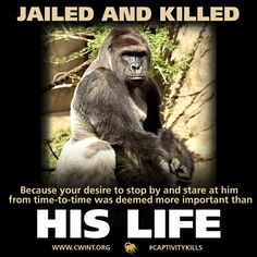 "These animals are taunted & screamed at ALL DAY LONG. It breaks their souls. All for self entitled individuals who have no feelings for the captives or empathy for the hellish ""life"" they're forced to endure."