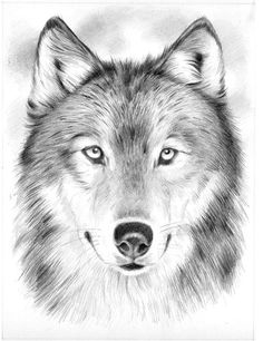 Reeves™ Medium Sketching by Numbers Wolf Pencil Drawings Of Animals, Animal Sketches, Drawing Sketches, Art Drawings, Sketching, Wolf Sketch, Wolf Husky, Wolf Painting, Wolf Tattoo Design