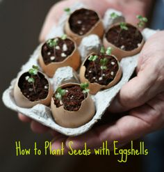 How to Plant Seeds with Egg Shells