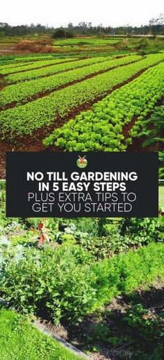 No-Till Gardening in 5 Easy Steps Plus Extra Tips to Get You Started