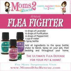 All- Natural flea treatment