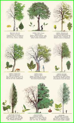 Résultats de recherche d'images pour «variété arbres»