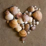 Seashell Project Ideas - Bing Images