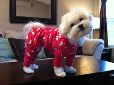 """I believe I am the handsomest pup on the planet, even in my red lambie jammies.  You believe what you want."" <3 +tc"