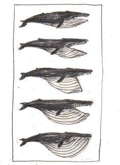 Whale Illustration Master Project | Penelope Deltour