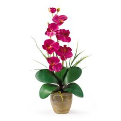"Single Stem Phalaenopsis Silk Orchid Arrangement - Bursting with color and personality the Phalaenopsis is perhaps the most popular variety of all the orchids. Six lively blooms and two buds are complimented by genuine bamboo, which enhances the silk plant's authenticity. Featuring nearly natural leaves, moss and roots, this familiar favorite is sure to charm the masses. Color: Beauty, Height: 21"", Vase: H 4-1/4"" W 5-1/4"" Number of Trunks: NA Number of Flowers: 1 Stem with 6 Flowers and 2…"